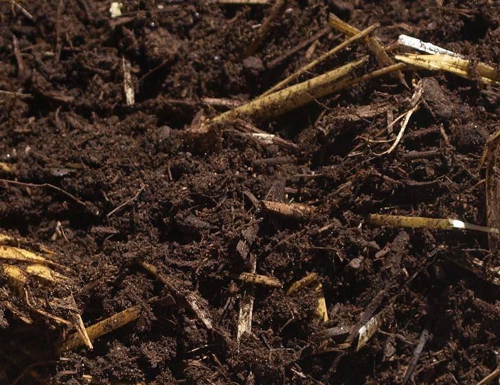 Mushroom compost for Mushroom soil
